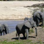 252.   Parks where wild animals roam freely (Gail Nattrass)